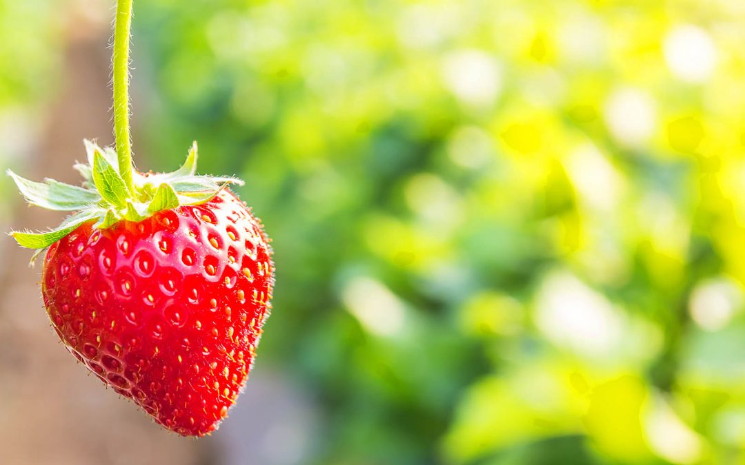 Endlich ist Erdbeerzeit!
